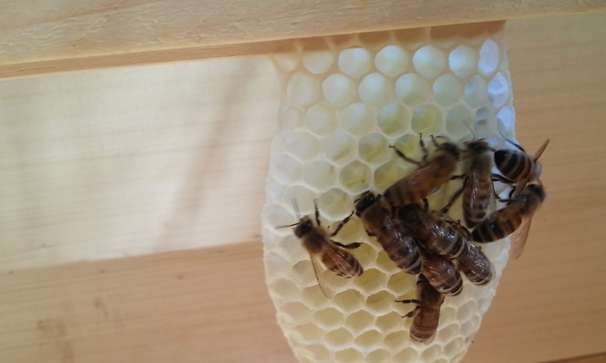Natural Instincts Beekeeping