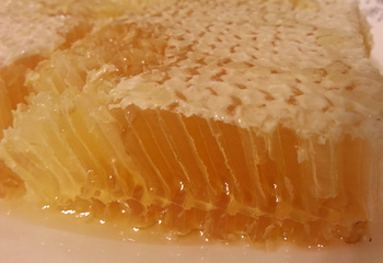 Honey on a comb. Yum!