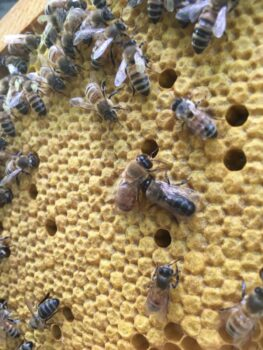 Hands-on class at the apiary